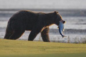 GolfAhoy-alaska-golf-cruise-regatta